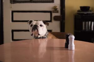 il cane Nellie nella parte di Marvin