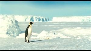 pinguini1